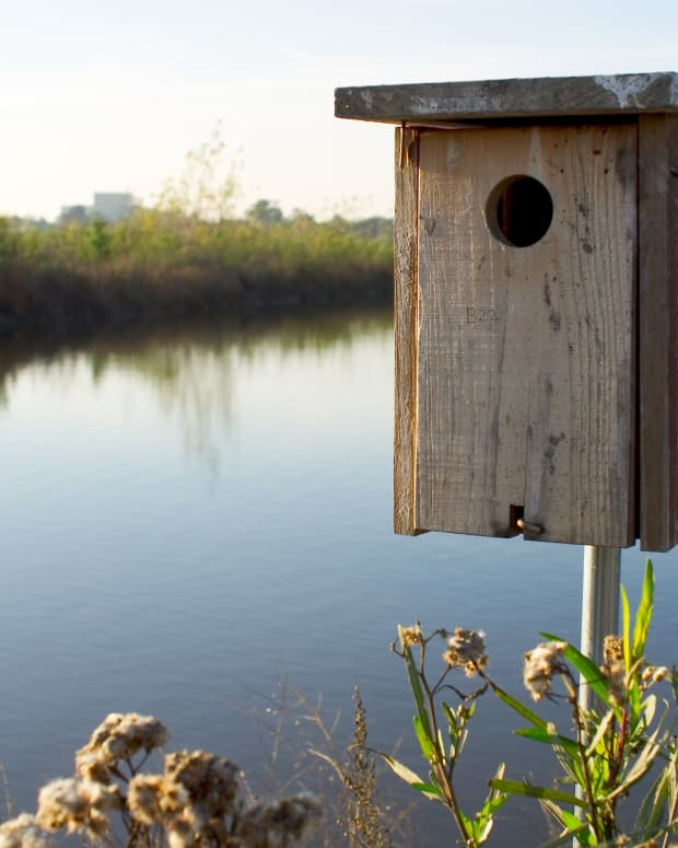 wood-duck-nesting-box