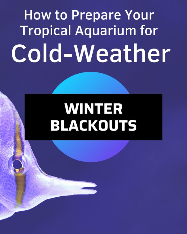 prepare-your-aquarium-for-winter-power-outages