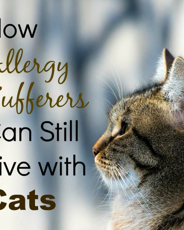 living-with-hypoallergenic-cats