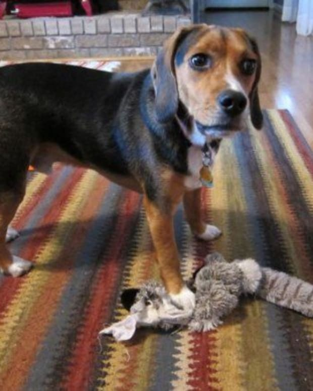 toys-for-beagles-great-beagle-gifts