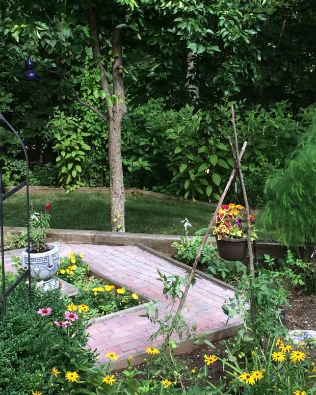 attracting-hummingbirds-into-your-garden