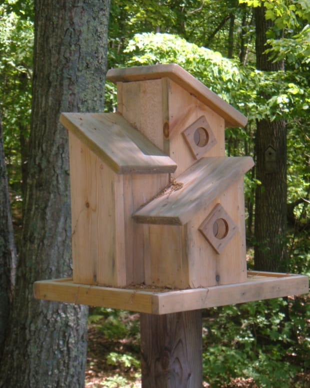 wood-bird-house-design