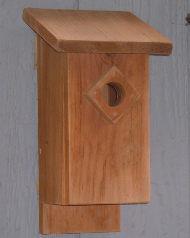 a-bluebird-house-for-the-garden