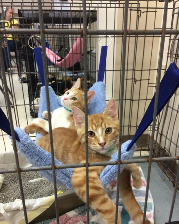 hammocks-for-cats