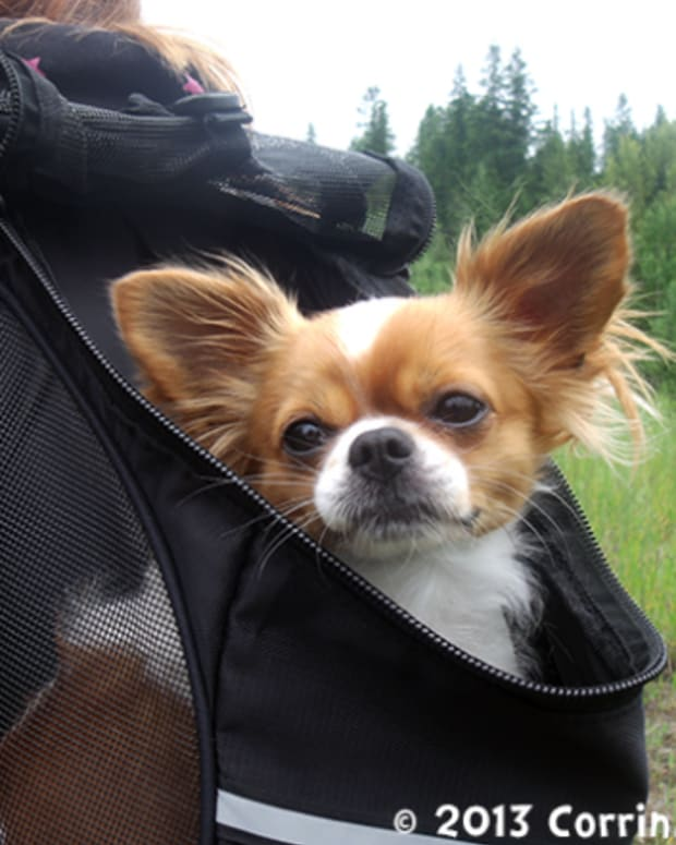 the-outward-hound-backpack-pet-carrier