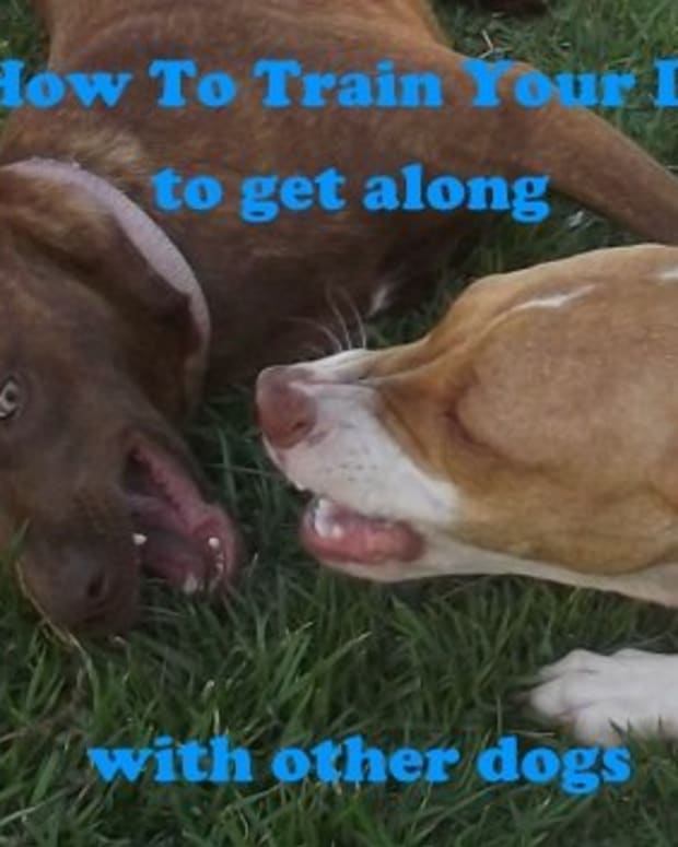 7 Easy Ways to Train a Dog to Get Along With Other Dogs - PetHelpful - By  fellow animal lovers and experts
