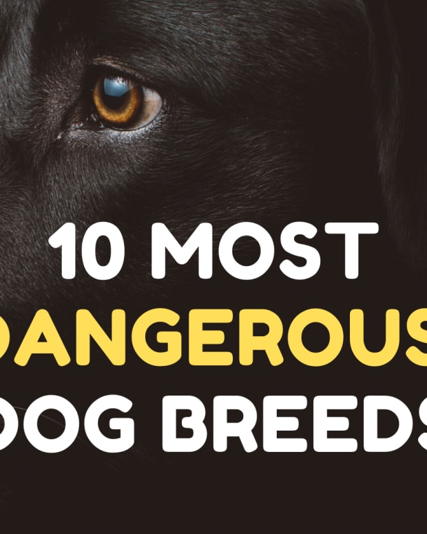 most-dangerous-dog-breeds