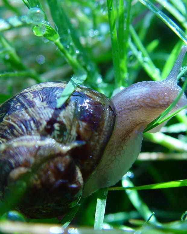 hwo-to-rid-your-garden-of-slugs-and-snails