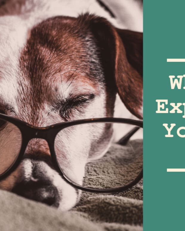 senior-dogs-what-to-expect-as-your-dog-ages