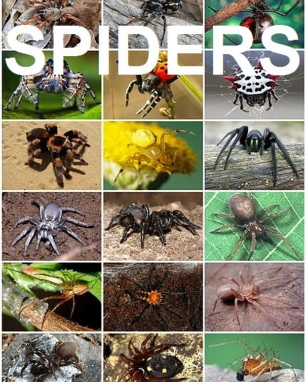amazing-facts-about-spiders