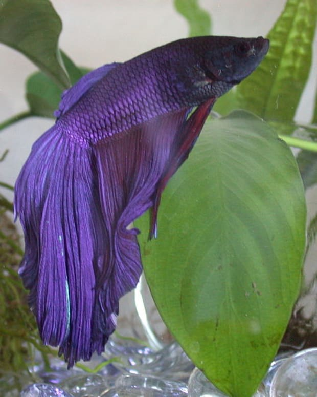 betta-fish-supplies-list