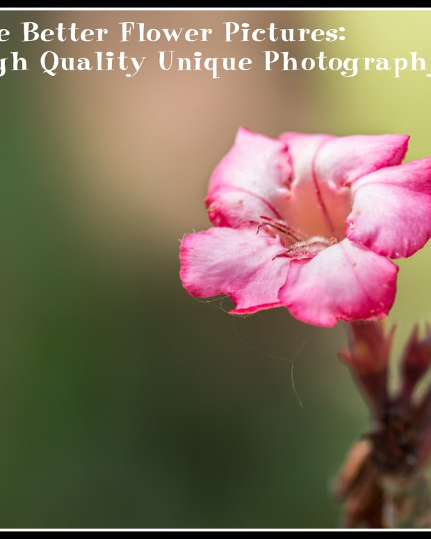 how-to-take-better-flower-pictures-tips-for-unique-high-quality-photography