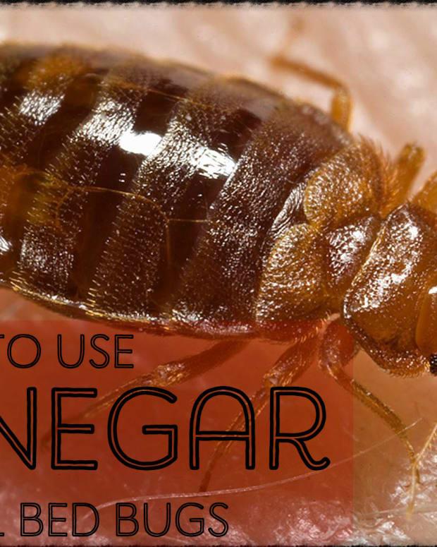 does-vinegar-work-on-bedbugs