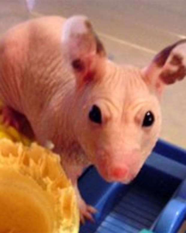 10-hairless-animals-that-will-freak-you-out
