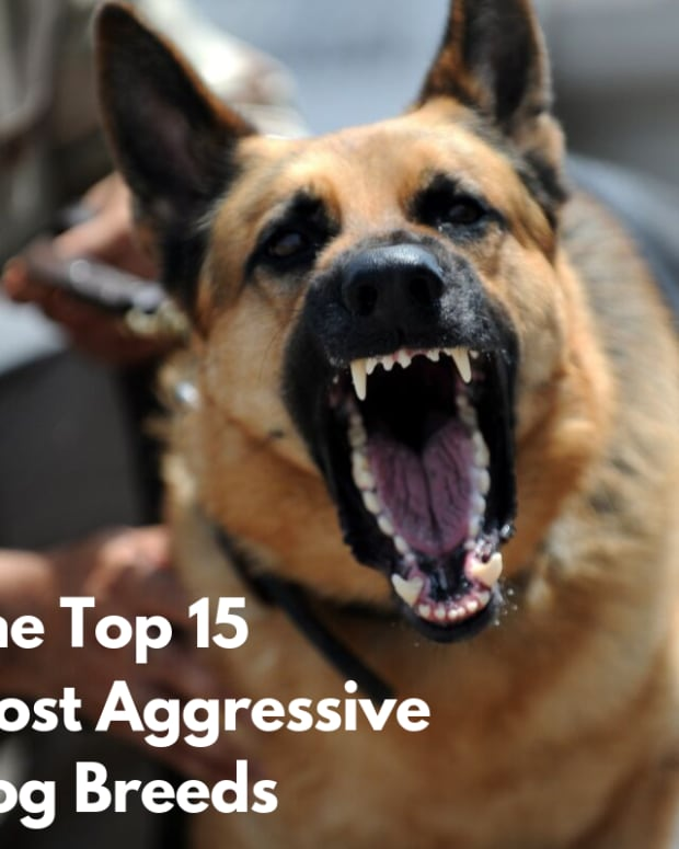 worlds-most-aggressive-dog-breeds