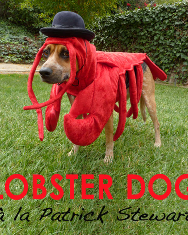 how-to-make-a-lobster-costume-for-your-dog