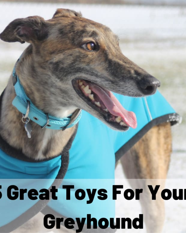5-dog-toy-gifts-for-greyhounds