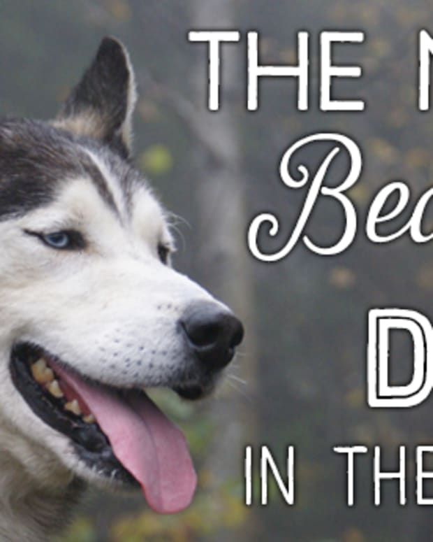 top-10-most-beautiful-large-dog-breeds