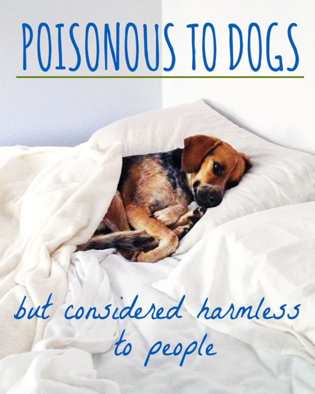 poisonous-to-dogs