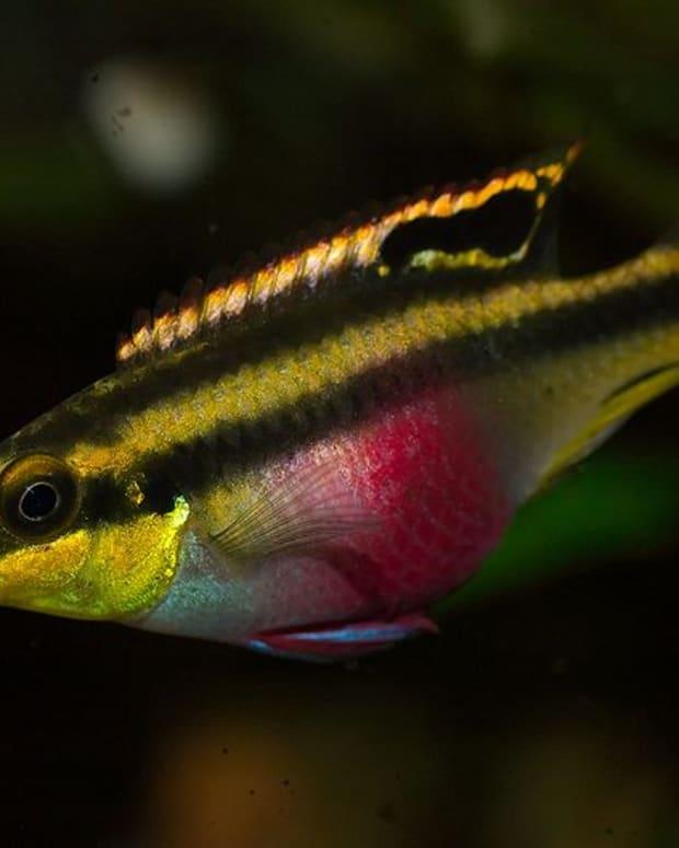 the-best-and-worst-beginner-fish-for-your-aquarium