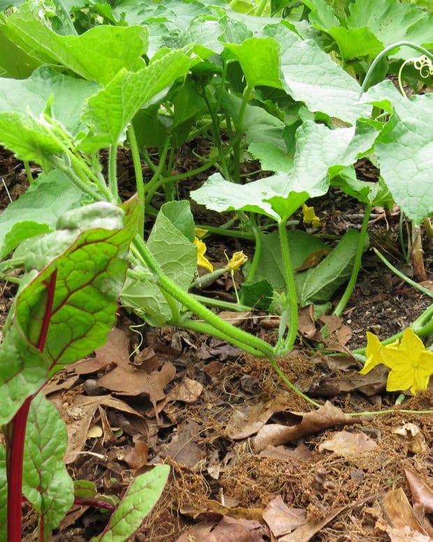 top-10-sustainable-gardening-methods