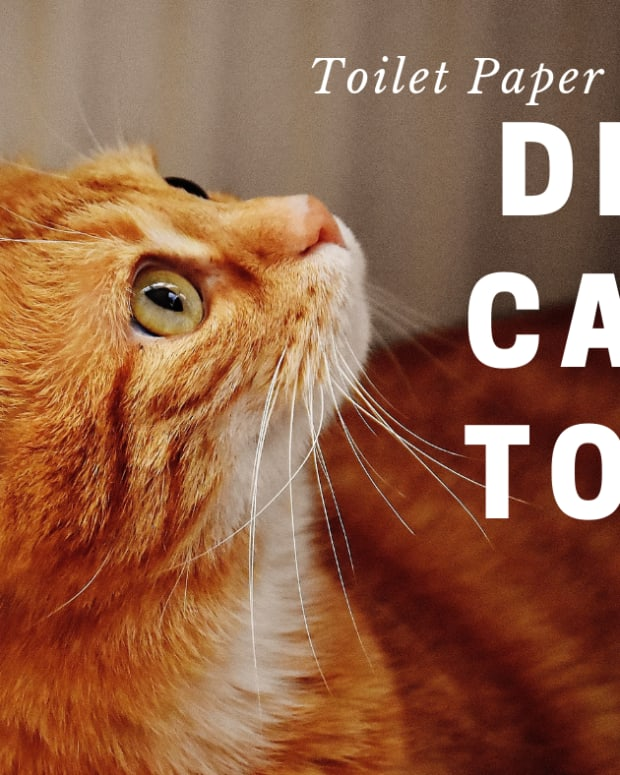 free-toilet-paper-tube-cat-toy