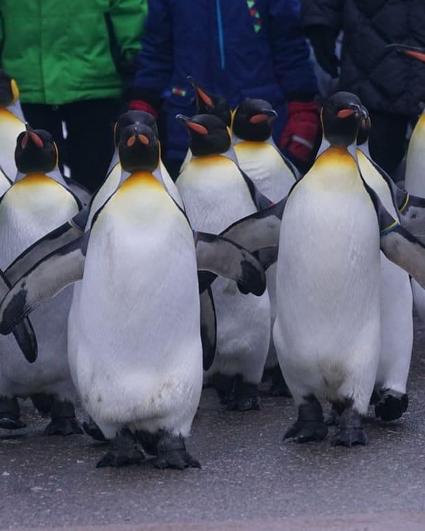 penguin-day