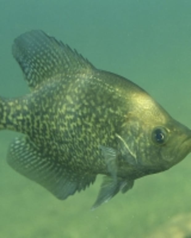 texas-crappie-fishing
