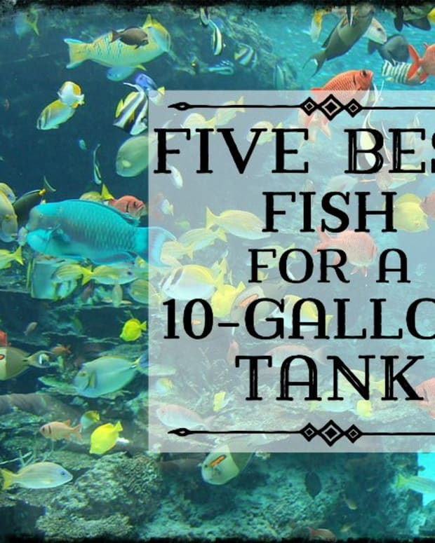 best-fish-for-10-gallon-tank