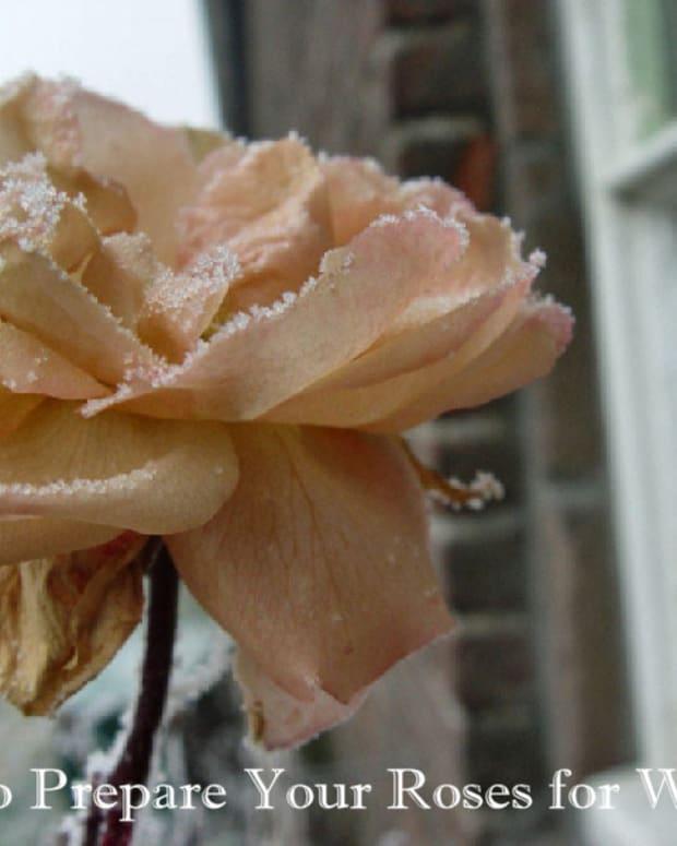 sweet-memories-of-roses