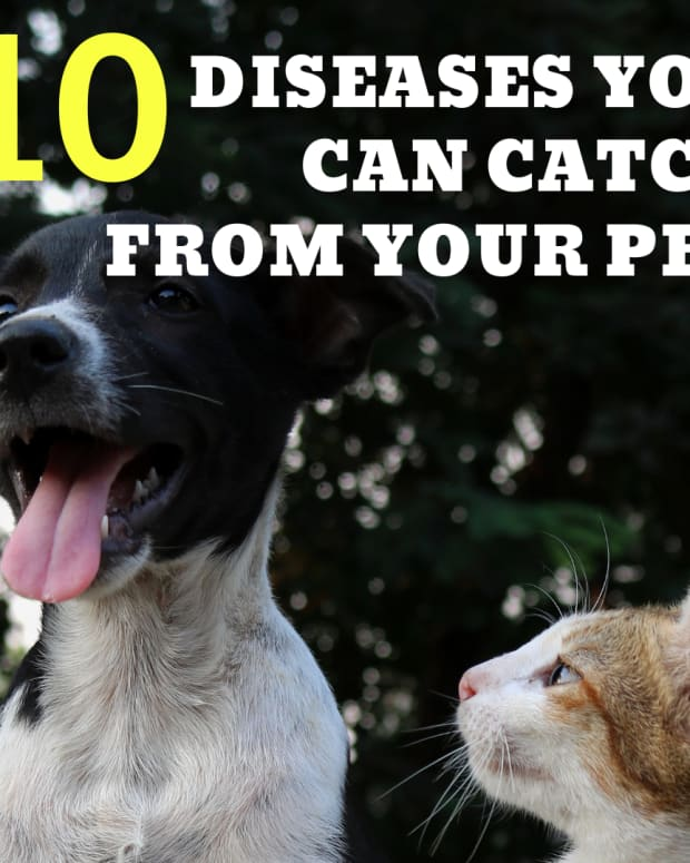 10-diseases-you-can-catch-from-pets