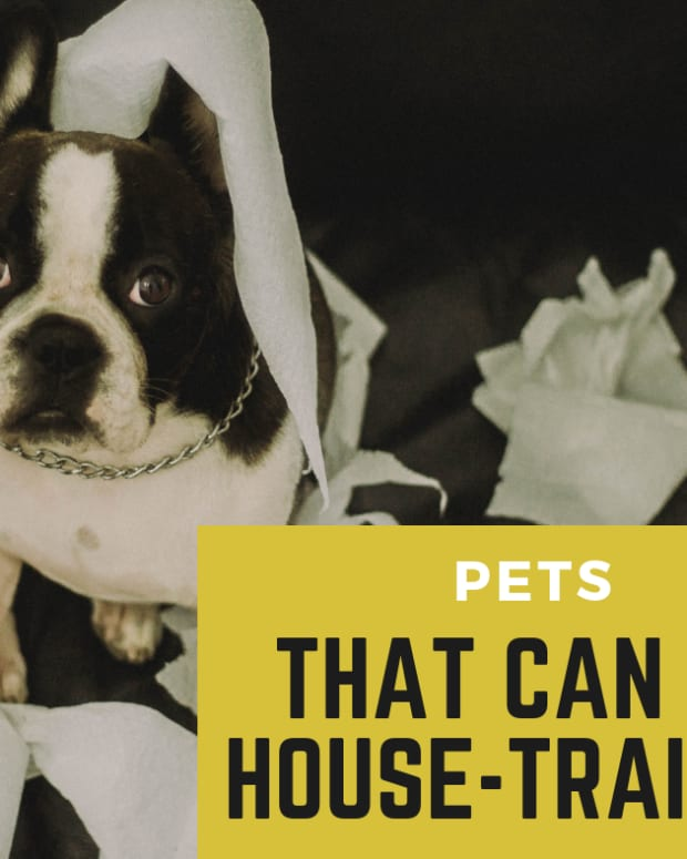 pets_that_can_be_housetrained