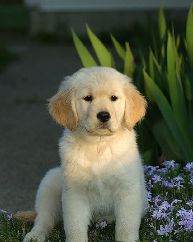 celebrity-dog-names