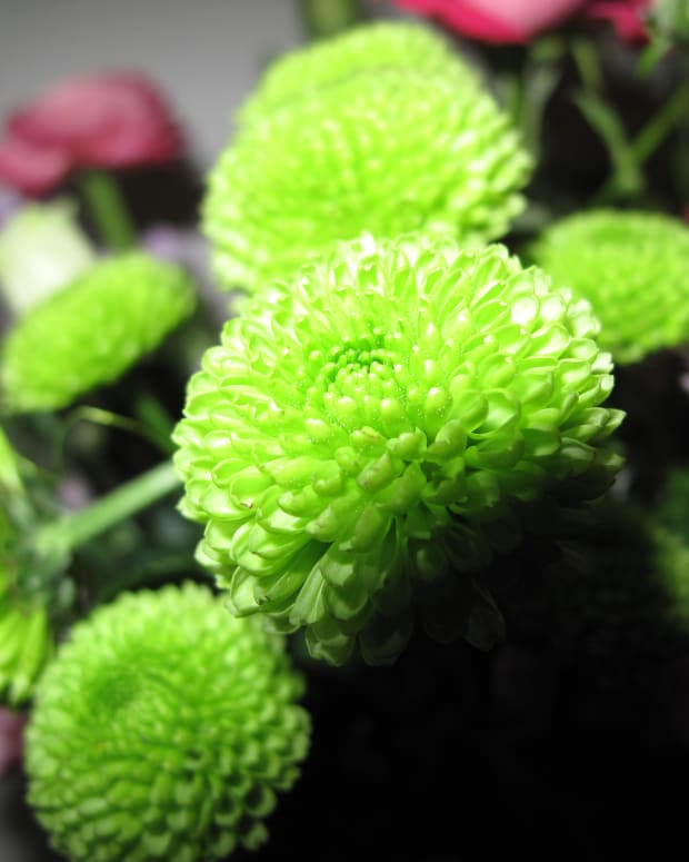 green-flowers-for-gardens-and-flower-arrangements