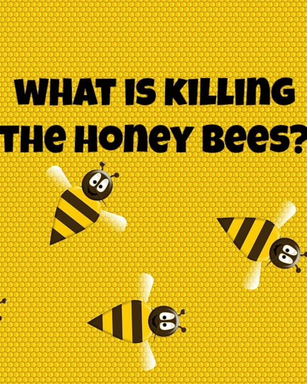 what-is-killing-the-honey-bees-colony-collapse-disorder