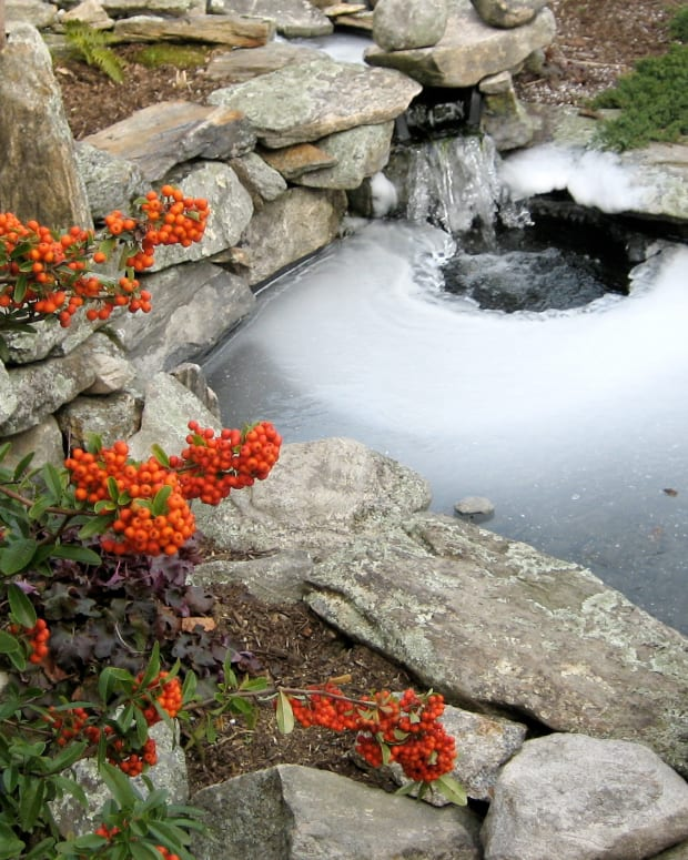 a-guide-to-maintaining-your-fish-pond-through-the-seasons