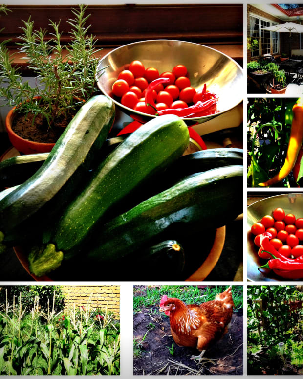 how-to-live-a-sustainable-simple-lifestyle