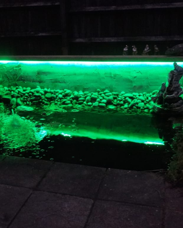 wildlife-pond-makeover-with-water-features-and-rgb-led-strip-lighting