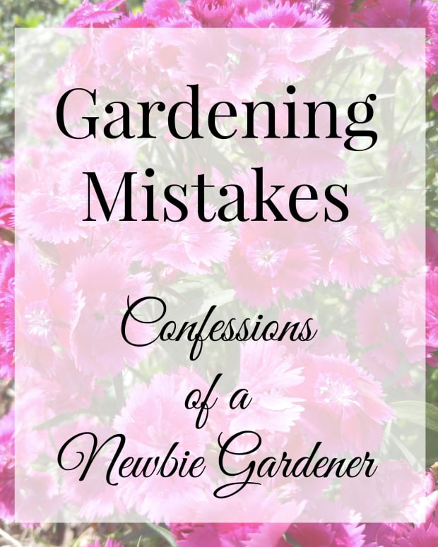 gardening-mistakes-confessions-of-newbie-gardener