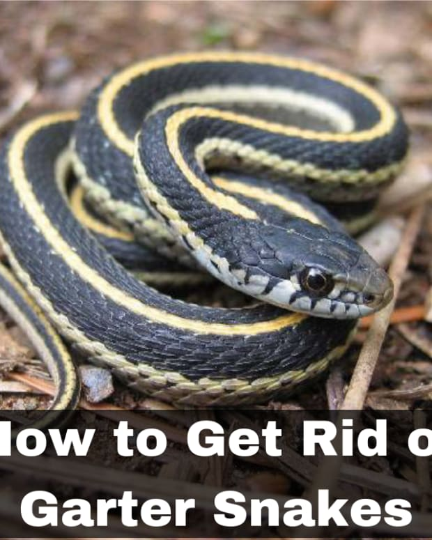 how-to-get-rid-of-garter-snakes-without-killing-them-7-tried-and-true-ways