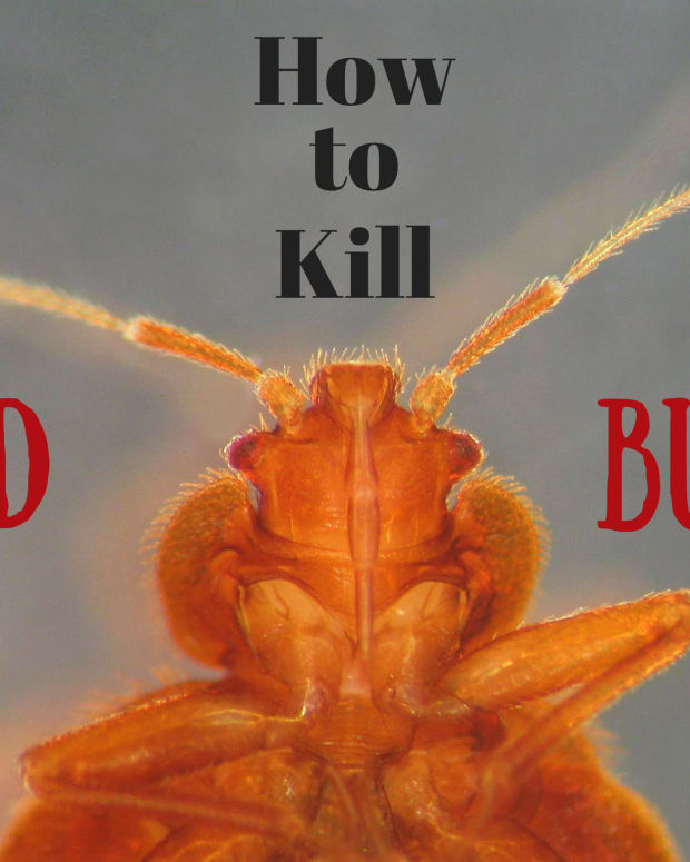 5-things-that-kill-bed-bugs