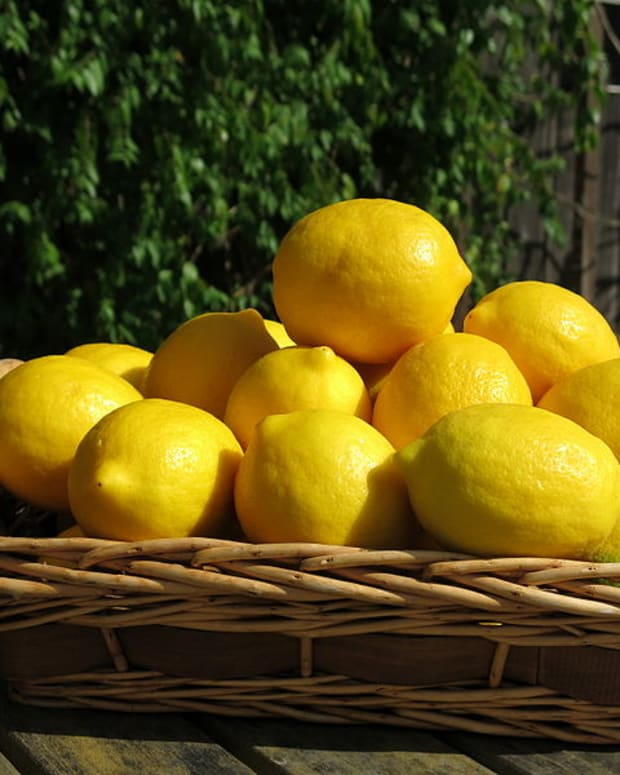 how-to-grow-a-meyer-lemon-tree