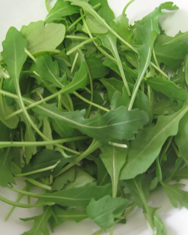 a-guide-to-growing-arugula