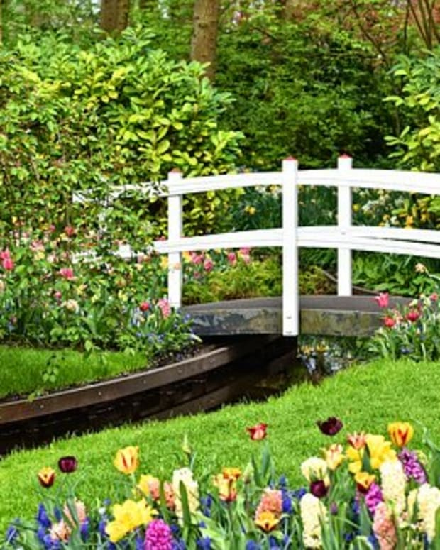 gardening-jargon-explained-plant-life-cycles-and-their-ability-to-survive-weather-conditions