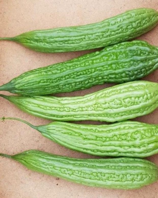 how-to-plant-harvest-and-cook-ampalaya-or-bitter-gourd