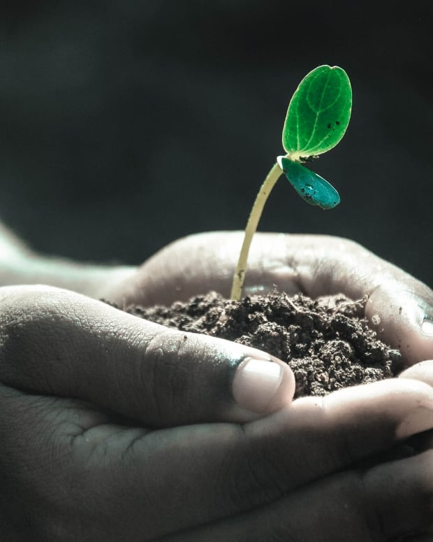 why-you-should-test-your-soil