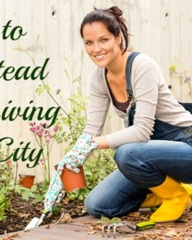how-to-homestead-while-living-in-the-city