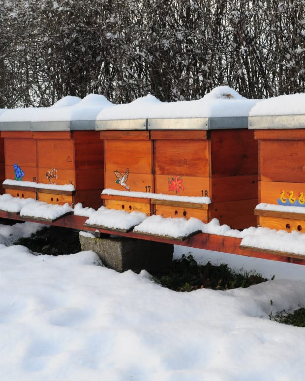 what-do-beekeepers-do-in-winter