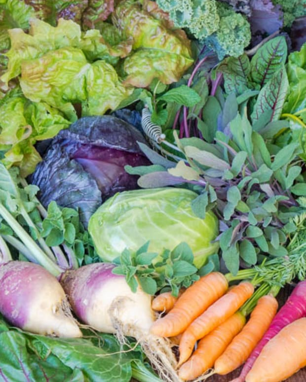 10-best-and-easiest-fall-vegetables-to-plant-now