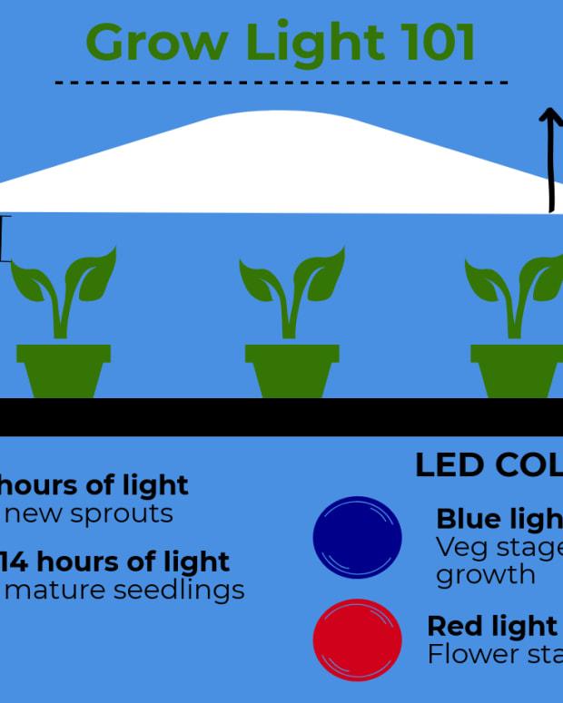 grow-light-for-starting-seedlings